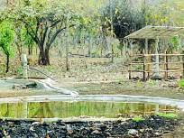 बोर व्याघ्र प्रकल्पात वन्य प्राण्यांसाठी ५६ पाणवठे
