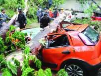 पावसाची 'झाडा'झडती!, झाड पडून ठाण्यात सहा गाड्यांचे नुकसान