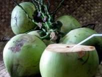 वेगाने वजन कमी करण्यासाठी नारळाचं पाणी; जाणून घ्या कसे!