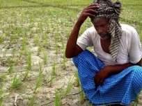 अकोल्यातील शेतकऱ्यांच्या पीक विम्याची रक्कम प.बंगालच्या बँकेत!