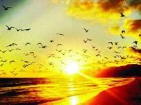 तुफानाची चाहूल देणारा पक्षी 'आडय'ची ओळख