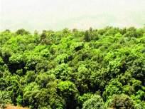 रत्नागिरी : धक्कादायक ! झपाट्याने कमी होत आहे रत्नागिरीतील वनक्षेत्र