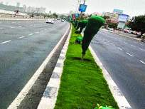 मुंबईतल्या रोपट्यांना वाचवतेय हिरवी जाळी