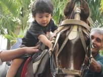 तैमुरचे घोडस्वारीचे फोटो पाहिले का?