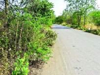 सिंधुदुर्गनगरीच्या सौंदर्यीकरणात पडणार भर, रस्ता दुतर्फा झाडांची लागडवड
