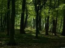 राज्यातील वन खात्याला रिक्तपदांनी पोखरले; १००६ पदांचा 'अतिरिक्त प्रभार'