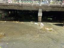 गोदावरीत लेंडी नाल्याचे दूषित पाणी; आरोग्य धोक्यात : महापालिकेचे दुर्लक्ष