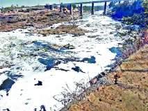 फेसाळयुक्त पाणी : नागरिकांच्या आरोग्याचा प्रश्न एकलहरे बंधाºयात पाणवेली