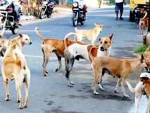 नाशकात मोकाट कुत्र्यांनी घेतला दोघांना चावा