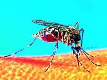 मलेरियाने पाय पसरले