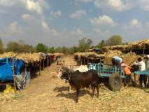 दुष्काळाने वसवले गावाशेजारी दुसरे अस्थायी समांतर गाव