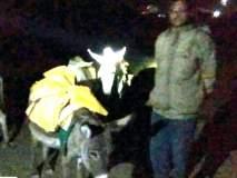 परभणी : वाळू उपसा करणारी गाढवं पकडली