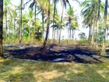 सिंधुदुर्ग :निगुडेत नारळ बागेला आग,शॉटसर्किटमुळे लागल्याचा प्राथमिक अंदाज