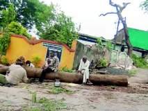 अवैधरीत्या विनापरवानगी तोडले झाड