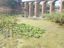 जीवनदायी कृष्णा नदीच ठरतेय आरोग्याला धोकादायक कारण...