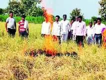 शेतकऱ्याने लावली धानाला आग