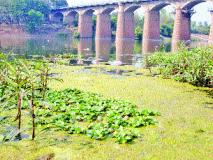 कृ ष्णा नदीला प्रदूषणाचा विळखा