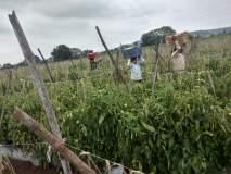 नाशिक पूर्व भागातील शेतकऱ्यांना रब्बी हंगामाची आशा
