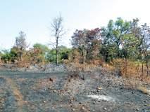 सिंधुदुर्ग : आंबा, काजू बागेला आग लागून नुकसान, एक लाखाची हानी, नाटळ-हुमलेटेंब येथील घटना