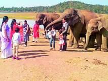 कमलापूर हत्ती कॅम्पमध्ये पर्यटकांची संख्या वाढली