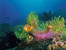 70 फूट खोल पाण्याखाली दिसलेला निमो