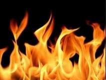 उंबरखेडला शिंदीची दोन हजार झाडे आगीत जळून खाक