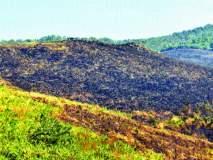 वनसंपदा नष्ट करण्यासाठी आरेत जंगलाला लावण्यात आली आग
