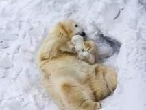 मनुष्य असो वा प्राणी आईचं प्रेम सगळ्यांसाठी सारखंच, कसं ते बघा!