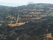अंबरनाथमध्ये वीस हजार झाडे आगीच्या भक्षस्थानी, समाजकंटकांनी जाळली झाडं