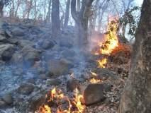 अंबाझरी वनाचे आगीपासून कसे संरक्षण करता येईल? हायकोर्टाची विचारणा