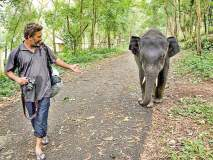 हत्तींशी बोलणारा आनंद