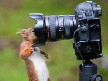 प्राण्यांच्या अशाही काही दिलखेचक अदा झाल्या कॅमेऱ्यात कैद