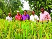 भात पिकासाठी पाणी व्यवस्थापनाची गरज