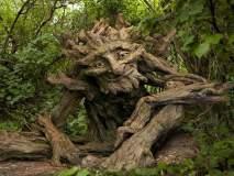 'अशी' चित्रविचित्र झाडं तुम्ही कधीच पाहिली नसतील!