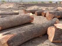 अवैध वृक्ष तोडीवर कारवाईसाठी वनविभागाला सापडला मुहुर्त