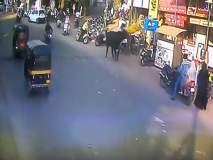 VIDEO: अन्... रस्त्यावरून चालणाऱ्या महिलेला बैलाने हवेत उडवले