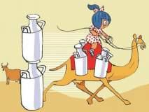 मधुमेहींसाठी खुशखबर...! अमूलने आणले सांडनीचे दूध...