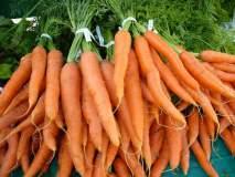 गाजरातून 'बिटा कॅरोटिन' मिळविण्याचे नवे तंत्रज्ञान