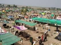 'चारा छावण्या भाजप-शिवसेना कार्यकर्त्यांसाठी कुरण'