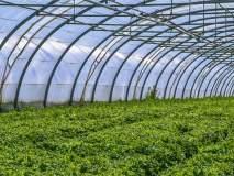 कंत्राटी शेती कायदा: सखोल चर्वितचर्वणाची गरज