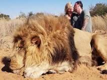 सिंहाची शिकार करून किस करत होतं कपल; नेटकऱ्यांनी घेतलं फैलावर