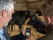 बाबो! आता गायी-बैलांच्या डेटिंगसाठीही खास अॅप, शेतकऱ्यांना होतोय फायदा!