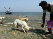 या बेटावर फक्त कुत्रेच राहातात... मच्छिमारांच्या मदतीमुळे राहिले जिवंत