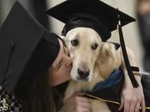 एका कुत्र्याचा मानद पदवी देऊन सन्मान, जाणून घ्या कारण!