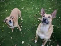 बोंबला! दोन कुत्र्यांच्या नावामुळे मालकाला १० दिवस तुरूंगवासाची शिक्षा!