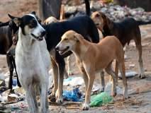 भटक्या कुत्र्यांच्या प्रश्नावर महिला नगरसेवक आक्रमक