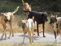 पातोंड्यात पिसाळलेल्या कुत्र्याचा आठ जणांना चावा