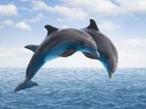 डॉल्फिन मृत होण्यामागील कारणे शोधण्याची गरज
