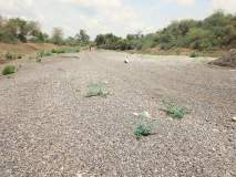 Drought In Marathwada : खरीप पिके गेली, रबीची शाश्वती संपली