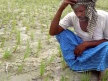 दुष्काळ मूल्यमापन पद्धतीवरून शेतकऱ्यांत नाराजी